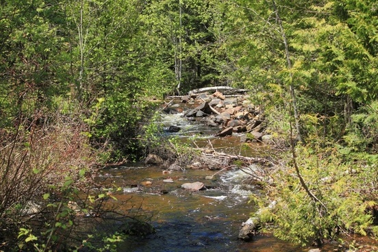 stream and trees at sleeping giant provincial park ontario canada