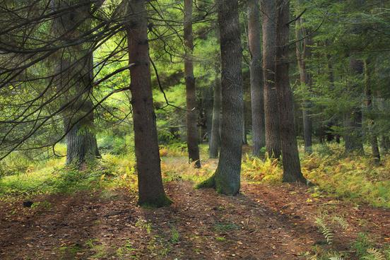 streamside woods 1