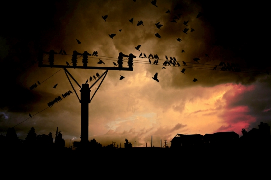 crowded birds on electricity line at sunset