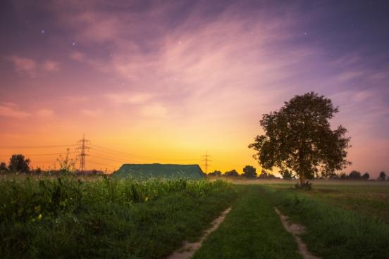 summer field sunset