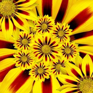 summer flower sun yellow