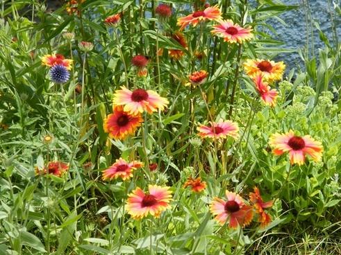 summer flowers meadow summer
