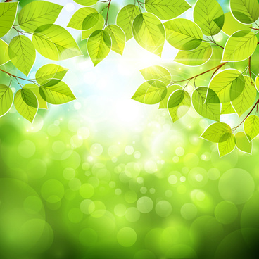 summer green leaves with sunlight vector background