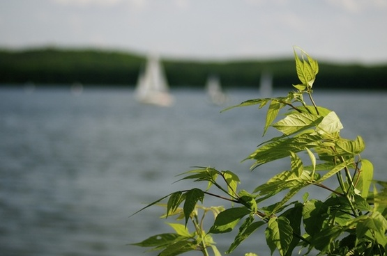 summer sail water