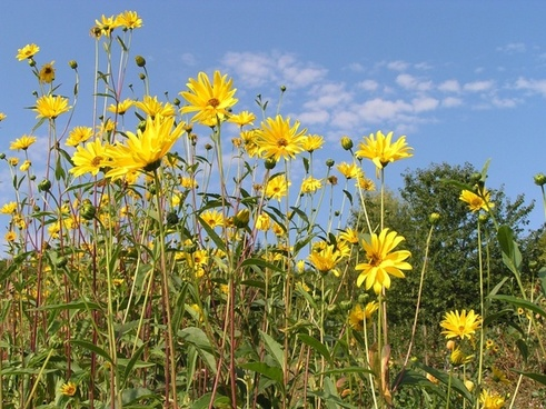 summer sunny sun flower