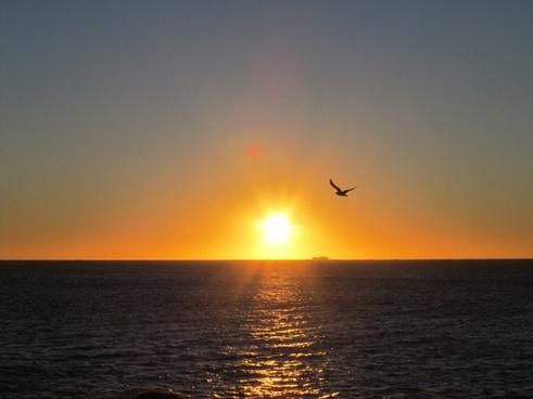 sun dawn bird