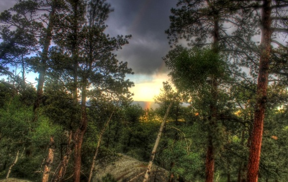 sun falling behind the trees in the black hills south dakota
