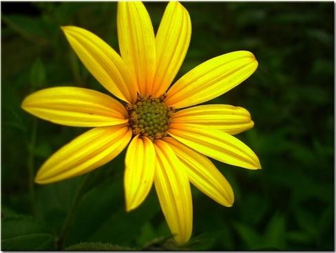 sun hat yellow flower