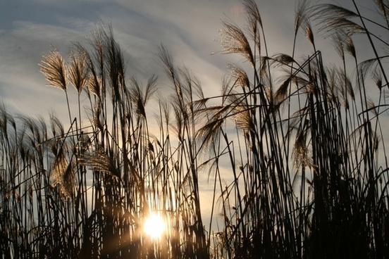 sun nature sea grass