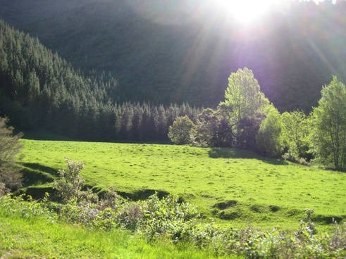 sun rays on green meadow