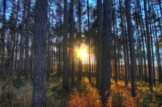sun setting through trees at kettle moraine north wisconsin