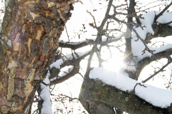 sun shining through branches with snow
