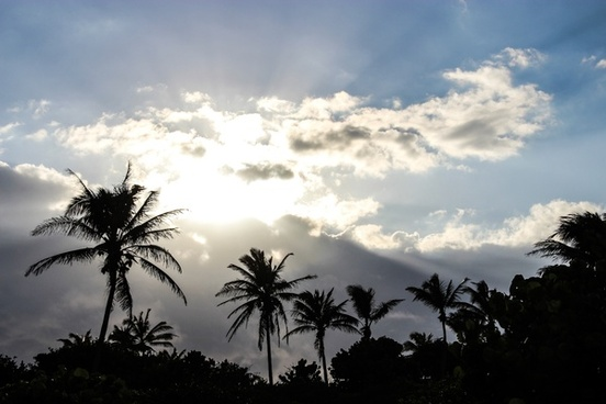 sun shining through clouds above palm trees