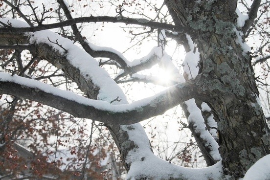sun shining through snow covered branches