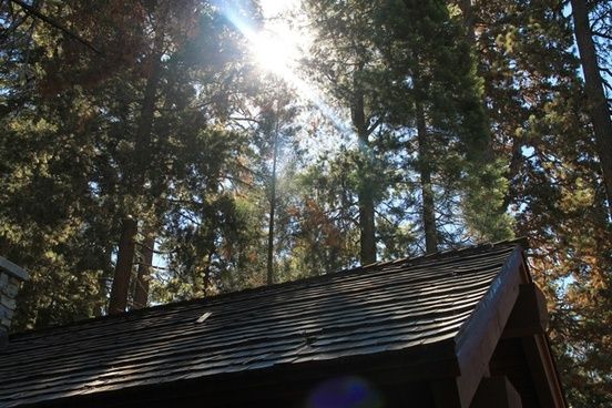 sun through trees over roof