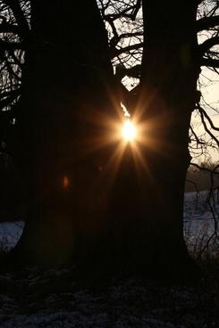 sun tree trees