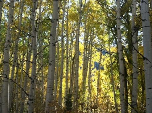 sun trees sunshine