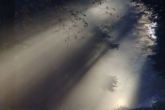 sunbeam fog autumn