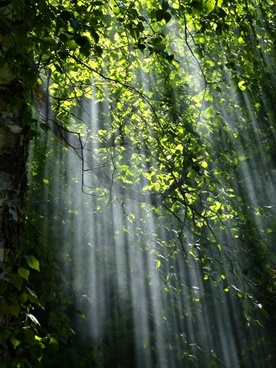 sunbeams forest trees