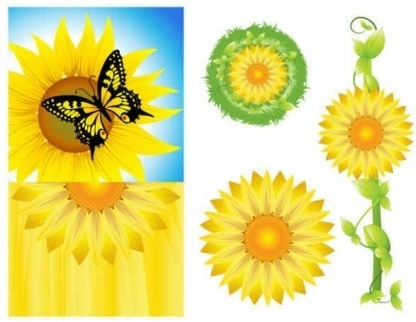 sunflower background graphics set vector
