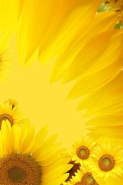 sunflower background image 13
