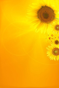 sunflower background image 1