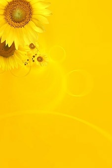 sunflower background image 9