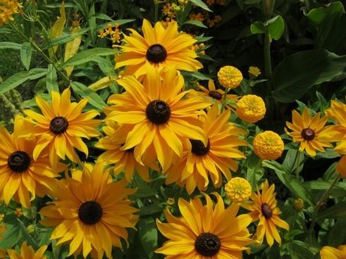 sunflower flowers bl�tenmeer