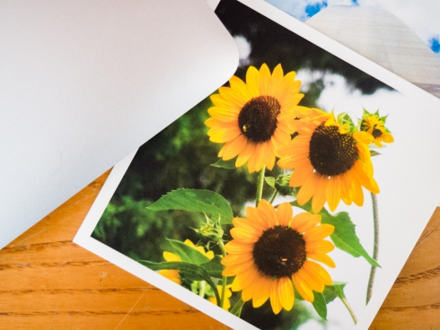 sunflower photo on desk with laptop