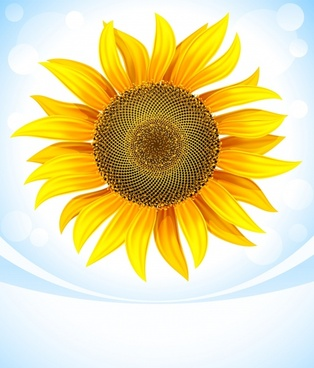 sunflower background modern bright colored decor