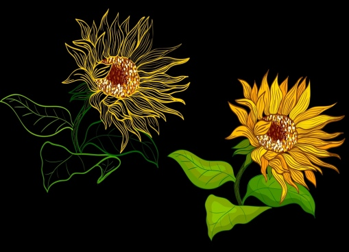 sunflowers drawing contrast design handdrawn sketch