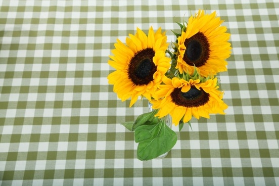 sunflowers on tablecloth