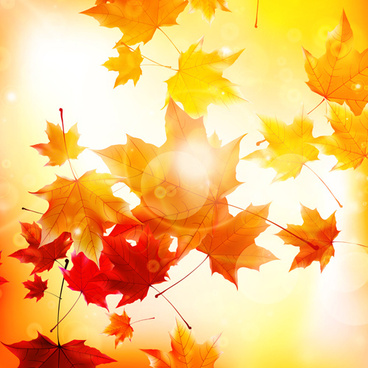 sunlight with autumn leaves background graphics