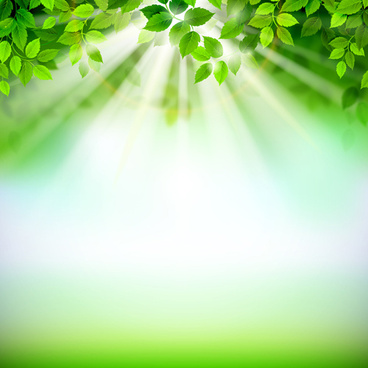 sunlight with green leaves shiny background vector