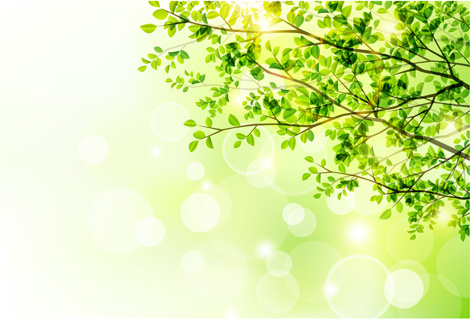 sunlight with green tree spring background