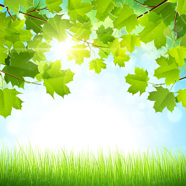 sunlight with nature background art vector