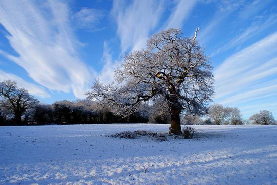 sunny snow tree