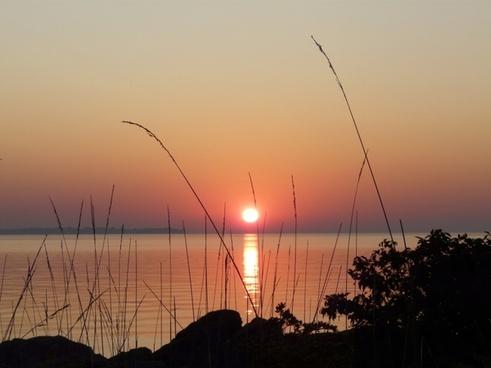 sunrise lake grass