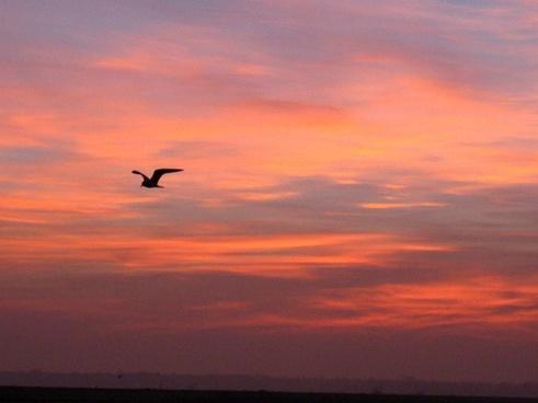 sunrise over bolsa chica wetlands