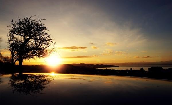 sunrise tree black