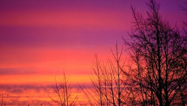 sunrise tree trees