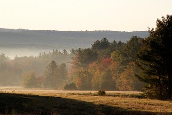 sunrise trees fog