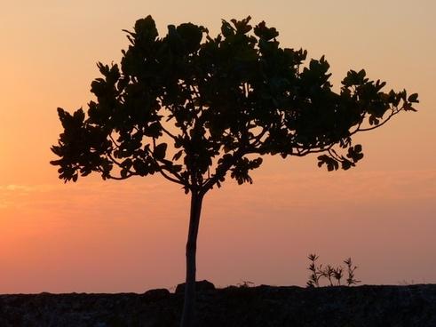 sunset abendstimmung sun