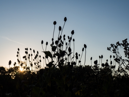 sunset behind leaves and flowers