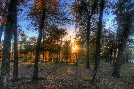 sunset behind trees in houston texas