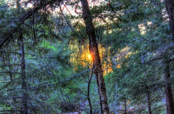 sunset between the trees at porcupine mountains state park michigan