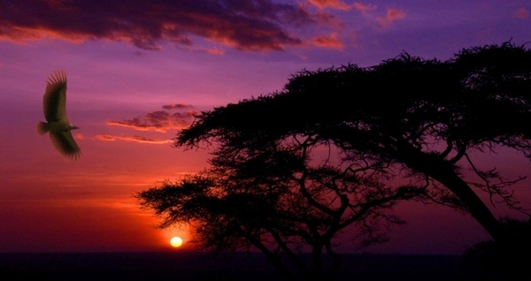 sunset bird africa