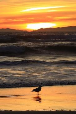 sunset california pacific