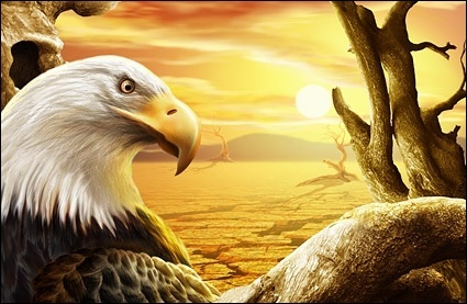 sunset eagles highdefinition layered psd