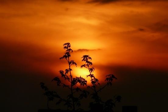 sunset landscape plant
